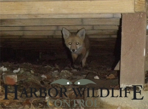Fox Control & Removal Services